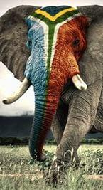 Elephant painted South African flag