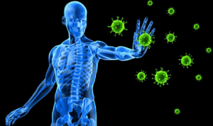 factors about human immune system gamblers should know